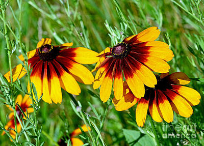 Photograph - Wildflowers by Rodney Campbell