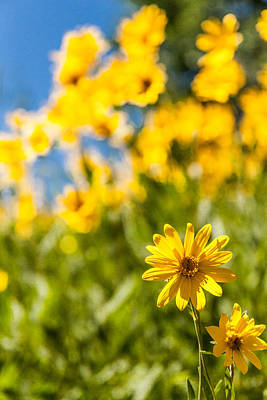 Teton Photograph - Wildflowers Standing Out Abstract by Chad Dutson