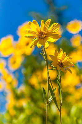 Flower Photograph - Wildflowers Standing Out by Chad Dutson