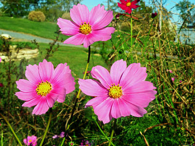 Knoxville Tn Photograph - Wildflowers by Steven Michael