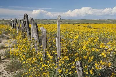 Wildflowers Surround Rustic Barb Wire Art Print by David Ponton