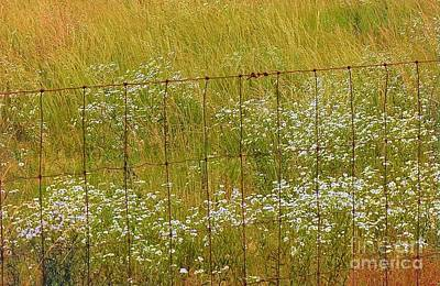Photograph - Behind The Barbed Wire by Janette Boyd