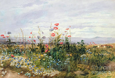 Eire Painting - Wildflowers With A View Of Dublin Dunleary by A Nicholl
