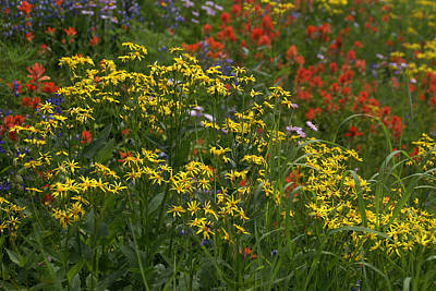 Photograph - Wildflowers Yellow by Robert Lozen