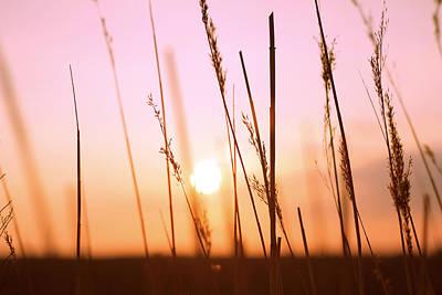 Wildgrass Sunset Art Print by David Schoenheit