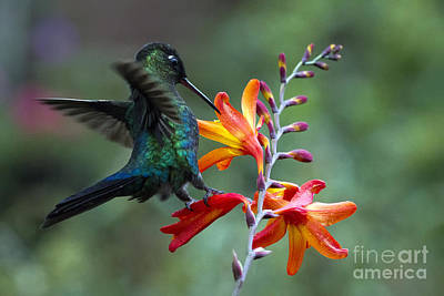 Costarica Photograph - Wildlife And Nature In Harmony by Alejandro Robert