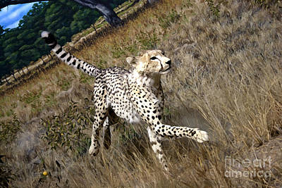 Cheetah Digital Art - Wildlife Cheetah by David Millenheft