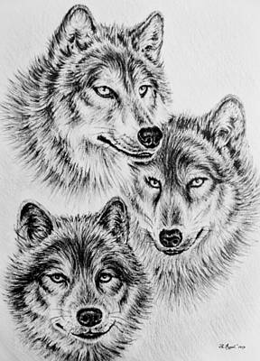 Animals Drawings - Wildlife collection-wolves by Andrew Read
