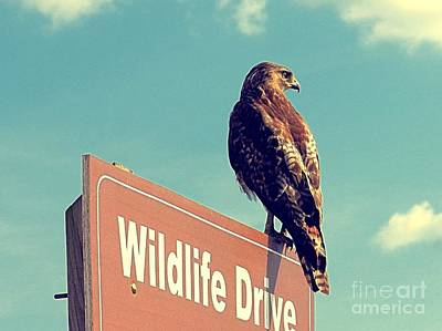 Wildlife Drive Greeter Art Print