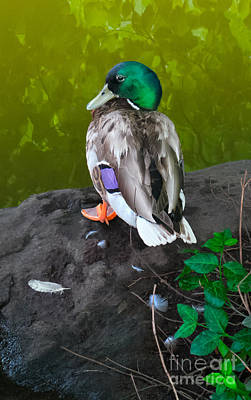 Photograph - Wildlife In Central Park by Charlie Cliques
