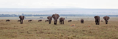 Photograph - Wildlife On The Masai Mara - Kenya by June Jacobsen