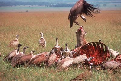 Carcass Photograph - Wildlife by Robert Caputo