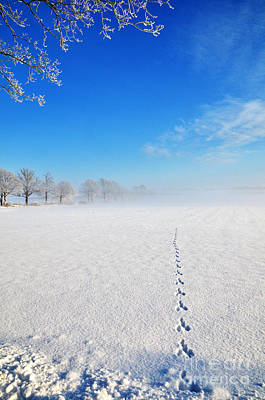 Photograph - Wildlife Tracks by Kennerth and Birgitta Kullman
