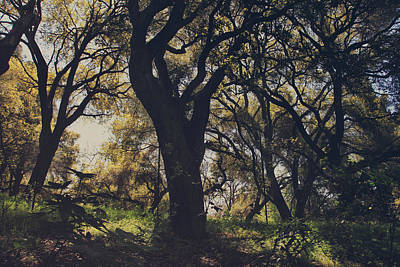 Dry Creek Photograph - Wildly And Desperately My Arms Reached Out To You by Laurie Search