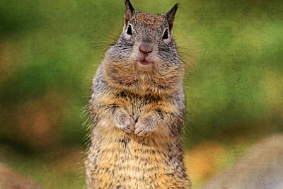 Squirrel Photograph - Will Work For Peanuts by Donna Kennedy