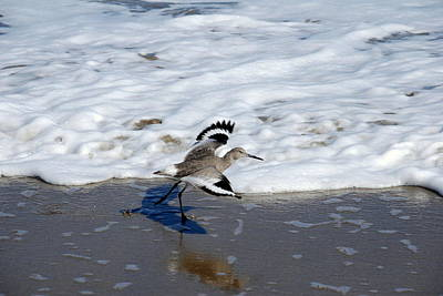 Photograph - Willet 001 by Larry Ward