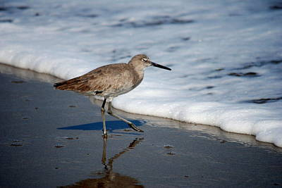 Photograph - Willet 002 by Larry Ward