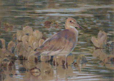 Pastel - Willet by Christopher Reid