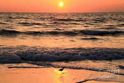 Willet In The Spotlight Print by Adam Jewell