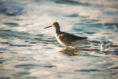 Photograph - Willet Wading Through The Ocean Foam by Alex Grichenko