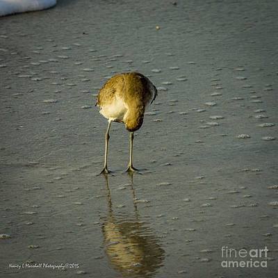 Comedian Drawings Rights Managed Images - Willet Washing 2 Royalty-Free Image by Nancy L Marshall