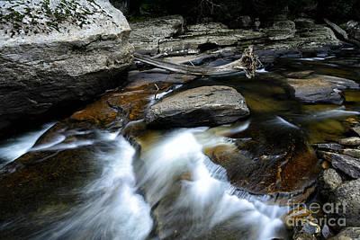 Williams River Rocks And Driftwood Art Print by Thomas R Fletcher