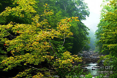 Williams River Summer Fall Color Art Print by Thomas R Fletcher