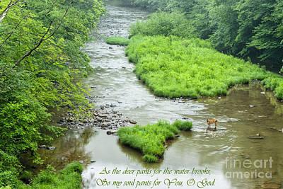 Williams River Summer Morning Art Print by Thomas R Fletcher