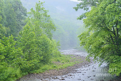 Williams River Summer Rain Art Print