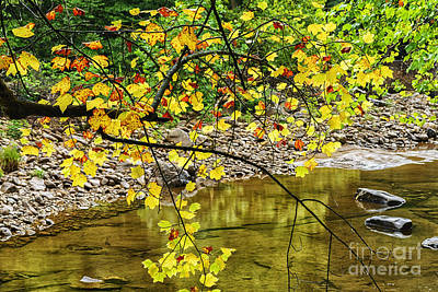 Williams River Tulip Poplar Art Print
