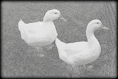 Photograph - Willie N Waddle by Kathy Sampson
