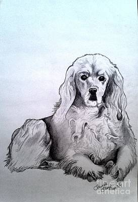 Cocker Spaniel Drawing - Willow 2 by Laurrie Lloyd