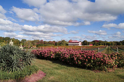 Winery Digital Art - Willow Creek Winery - Cape May New Jersey by Bill Cannon