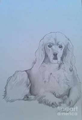 Cocker Spaniel Drawing - Willow by Laurrie Lloyd