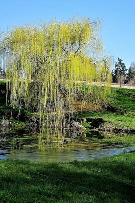 Jerry Sodorff Royalty-Free and Rights-Managed Images - Willow Reflections 243 by Jerry Sodorff