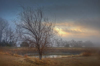 Willow Sunrise Art Print by Mark Alder