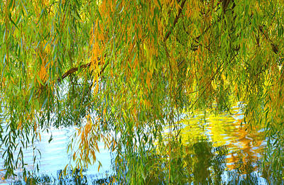 Willow Lake Photograph - Willow by Tim Reaves