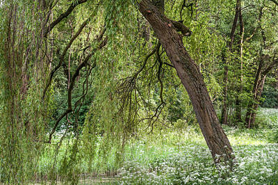 Photograph - Willow Tree At The Edge Of Pond by Jenny Rainbow