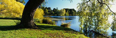 Willow Tree By A Lake, Green Lake Art Print by Panoramic Images