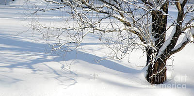 Photograph - Willow Tree In Snow by Tom Brickhouse