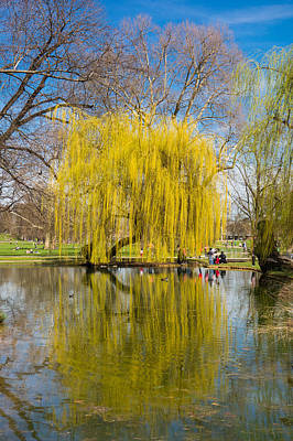 Photograph - Willow Tree Water Reflection by Matthias Hauser
