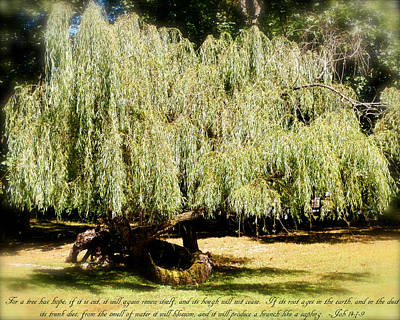 Photograph - Willow Tree With Job Verse by Richard Bryce and Family