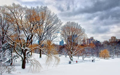 Photograph - Willows After Nor-easter by Steven Mancinelli