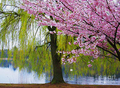 Photograph - Willows And Cherry Blossoms by Nina Silver