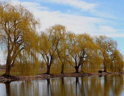 Photograph - Willows By The Pond by Trent Mallett