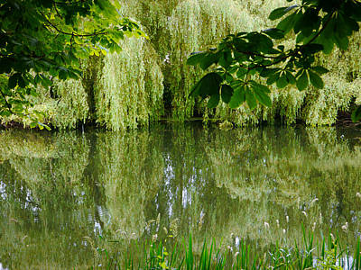 Photograph - Willows Reflected by Winifred Butler