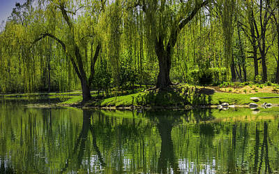 Photograph - Willows Weep Into Their Reflection  by LeeAnn McLaneGoetz McLaneGoetzStudioLLCcom