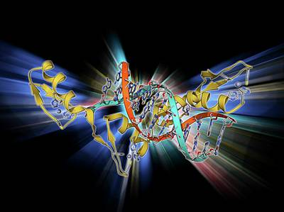 Molecular Structure Photograph - Wilms Tumor Suppressor Bound To Dna by Laguna Design