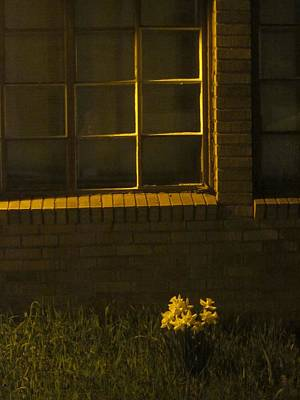 Photograph - Wind And Window Flower by Guy Ricketts
