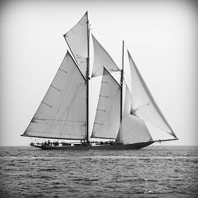 Photograph - A Beautiful Tall Ship With Spread Wings Sailing For Adventure And Glory Search - Wind And Wings by Pedro Cardona